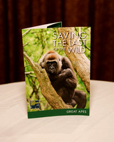 Saving The Last of The Wild: Great Apes